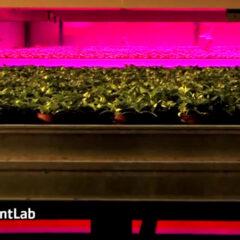 Voedselwoestijnen in de VS