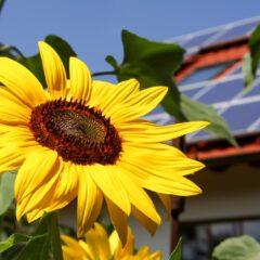 Subsidies voor energiebesparende maatregelen in huis
