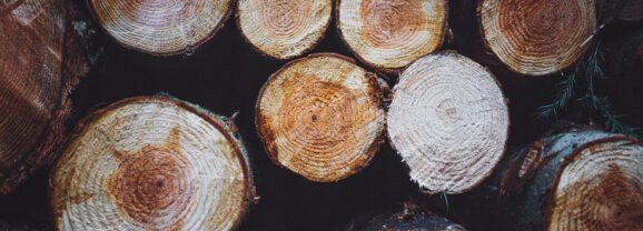 Dubben over biomassa