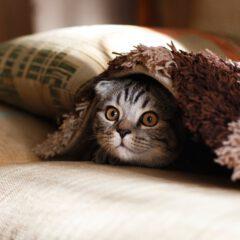 Verklein de CO2-pootafdruk van je huisdier
